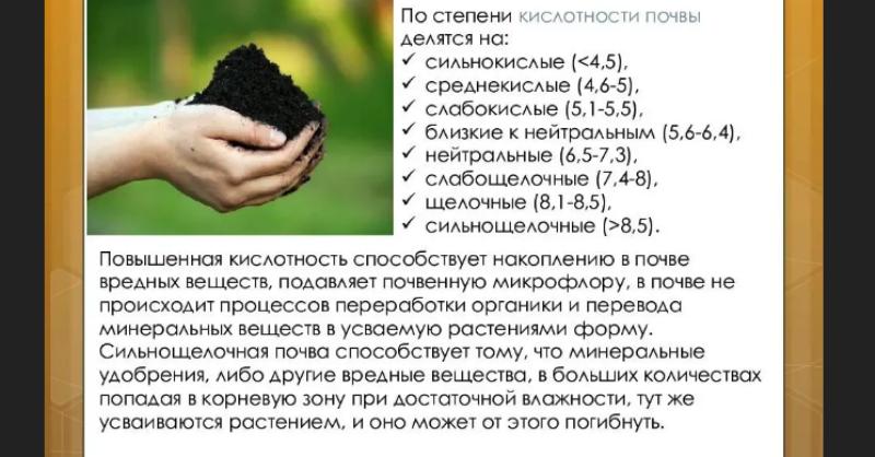 Как узнать кислотность почвы на участке какие почвы бывают