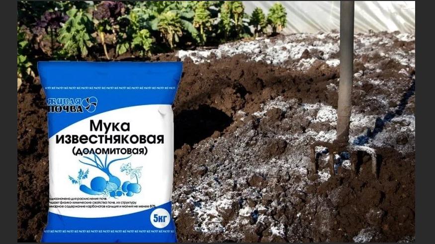 доломитовая мука для кислой почвы